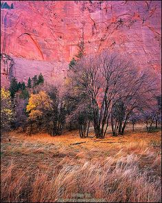 ✯ Fall in the Canyon - Utah