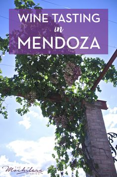 In spite of a few setbacks, touring wineries near Mendoza, Argentina by bicycle turned out to be one of my favorite memories of my travels in South America.