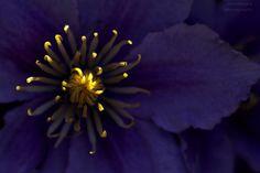 Flower fireflies