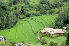 A Trip to Bali - TripFactory.com