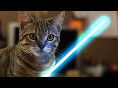 Jedi Kitten Uses the Force!