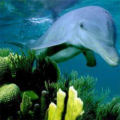 Akvodecor adalah unit usaha yang bergerak di bidang dekorasi air, khususnya aquascape, aquarium air laut, dan kolam koi.