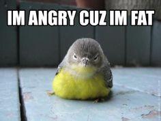 I'm angry cuz I'm fat...