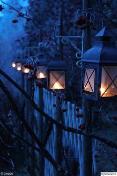 piha,lyhty,lyhdyt,kynttilä,aita,kynttilälyhty,joulu,joulukoti,viherpiha,kuukauden piha