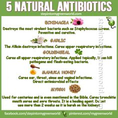 ☛ Your medicine cabinet is in your kitchen: 5 Natural #antibiotics for you. FOR A NATURAL #FLU SHOT RECIPE: http://www.stepintomygreenworld.com/greenliving/greenfoods/a-natural-flu-shot/ ✒ Share | Like | Re-pin | Comment