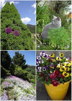 Garten-Impressionen im Frühsommer