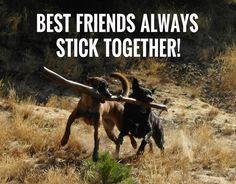 Best friends always stick together!