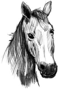 Free learn to draw a horse video