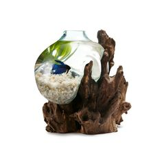 Coolest fish tank ever!