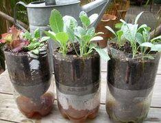 Cara Membuat Tanaman Hidroponik Sederhana - http://bibitbunga.com/blog/cara-membuat-tanaman-hidroponik-sederhana/