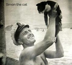 Able Seacat Simon of the Royal Navy's HMS Amethyst began his career in 1948 as the Amethyst's formal ratter, put on board to protect the food stores. Simon performed his duties so well that he was bestowed two awards in 1949, including the Dickin Medal for animal gallantry. Simon is the only cat to have received the Dickin Medal, and when he died, he was buried with full naval honors.