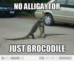 Brocodile