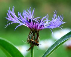 wasp   Endless Wildlife