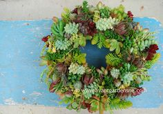 Succulent Wreath How-to – Garden Foreplay