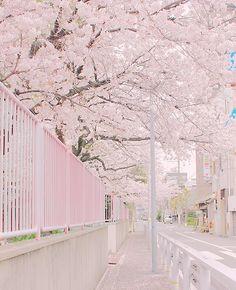 59 New Ideas Korean Aesthetic Wallpaper Pastel wallpaper 808888783056157275 Spring Aesthetic, Aesthetic Japan, Japanese Aesthetic, Korean Aesthetic, Aesthetic Themes, Flower Aesthetic, Aesthetic Pictures, Aesthetic Pastel, Scenery Wallpaper