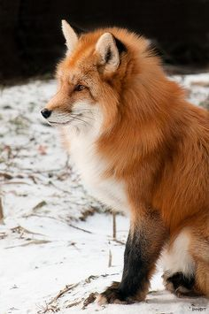foxes in Japanese art - Google Search