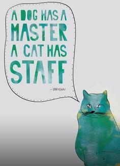 "Cats are so ""Prissy & Smart""!"