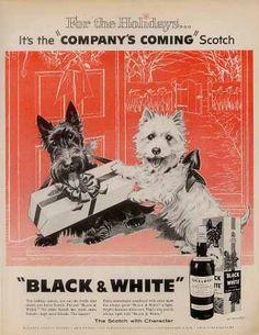 Chiens 'Whisky Black & White' - Publicité Vintage - 1960