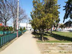 A Neuman család szerepe Arad közéletében - ARAD-Arad Sidewalk, Country Roads, Vienna, Walkways, Pavement