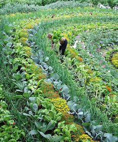 Horta em mandala
