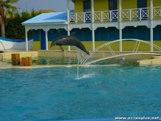 Marineland Antibes (06)