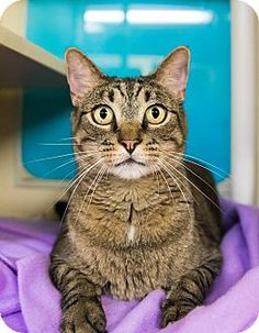 ***10/7/17  Good with kids! Very nice boy wants to be your one and only. I am already neutered, up to date with shots, and not good with cats. Available at Medina County SPCA, Seville OH