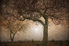 Tree+photograph+surreal++fairy+print+Fine+by+judeMcConkeyPhotos