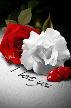 Latest 151 Good morning images for my love ~ Good morning inages Love Rose Flower, Beautiful Rose Flowers, Beautiful Flowers Pictures, Rose Pictures, Love Flowers, Love Heart Images, Love You Images, I Love You Pics, Love Wallpaper Download