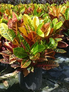 Tropical Plant Check out the free plant identification