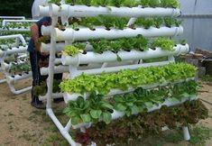 Como-montar-uma-horta-em-casa