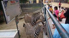 Kebun Binatang Pematang Siantar, Tempat Asyik Liburan Murah Keluarga