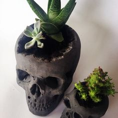 Twice The Love Skull Planters in Black fresh out of the workshop with our very own homegrown succulents  cactus. Large $60  Small $30