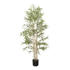 With a size of 5', it will create a relaxing and zen atmosphere, no matter which space you install it in. Moreover, this bamboo will stay green all year round and will require no maintenance, unlike natural bamboos. Natural Models, Faux Bamboo, Green Plants, Artificial Plants, Decoration, Houseplants, Mini, Dandelion, Namaste