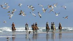 Activité : Equitation