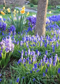 Spring garden ~ so ready for some pretty flowers!! Come on Spring time!!!