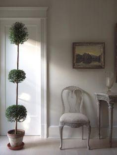 Indoor myrtle topiary.