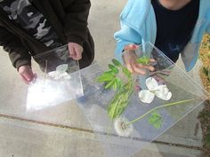 Two pieces of plexiglass with packing tape on one side to hold together= a window book. Go for a walk in the woods and slide leaves, flowers , and other found items between the plexiglass. Look at items with a magnifying glass. GREAT way to encourage science exploration,