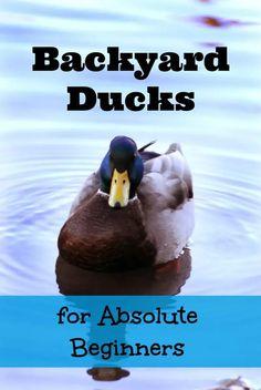 Backyard Ducks for Absolute Beginners - The Cape Coop Backyard Ducks, Backyard Poultry, Backyard Farming, Backyard Birds, Chickens Backyard, Ponds Backyard, Backyard Patio, Pet Ducks, Baby Ducks