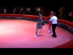 Terrible Boxer