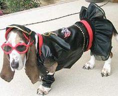 2016 Dogge Costume Contest