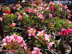 Image from http://i358.photobucket.com/albums/oo30/mmxvv/Blog3/Jatujak-Part-2-056.jpg.