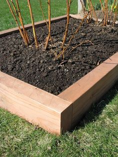 Redwood-edged raised bed... pricey, but gorgeous