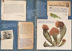 diaries of an herbalist