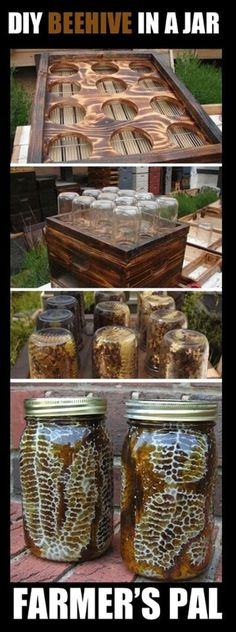 DIY Beehive in a Jar - Backyard Honey with this easy project. Honey with comb, already made inside of a mason jar! Fat Bee Man videos are also educational The Farm, Farm Gardens, Outdoor Gardens, Veggie Gardens, Vegetable Gardening, Backyard Projects, Diy Projects, Backyard Ideas, Mason Jars
