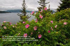 posters, peace, prayer, quote, quotations, photograph, Kodiak, Alaska, Marion Owen, Mother Teresa, roses