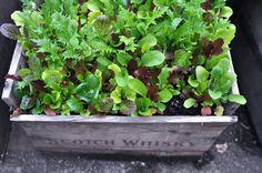 DIY Crate Planter Boxes — The Gardener