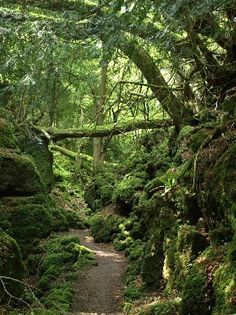 Puzzlewood. . . England (famous filming location)