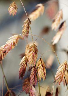 It's Fall Again - turningpoint2:  {Helaine}