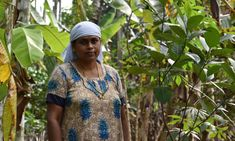 How a 'tree mortgage' scheme could turn an Indian town carbon neutral | Global development | The Guardian Economic Environment, Environment Agency, Cash Crop, Human Rights Issues, Carbon Neutral, Indian Village, Tree Roots, The Guardian, Trees To Plant