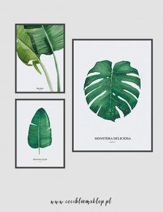 Plakat Monstera, Plakaty botaniczne, plakat botaniczny, plakat akwarela, plakat liść, plakat minimalistyczny, plakat na ścianę, plakat 50x70